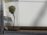 Oggetti per rifinire il presepe ,albero cod 156
