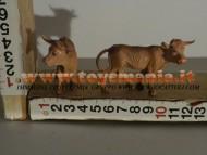 Millenium Christmas ANIMALI TORO ABBIAMO ANCHE CAPANNE GRANDI CIRCA 35 CM per PRESEPE IN STOCK da finire 40 PEZZI A 80 EURO CONTATTACI 3472436446